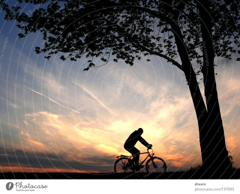 the long way home Evening Twilight Sunset Sunlight Homesickness Romance Tree Leaf Bicycle Man Leisure and hobbies Switch off Musculature Environment