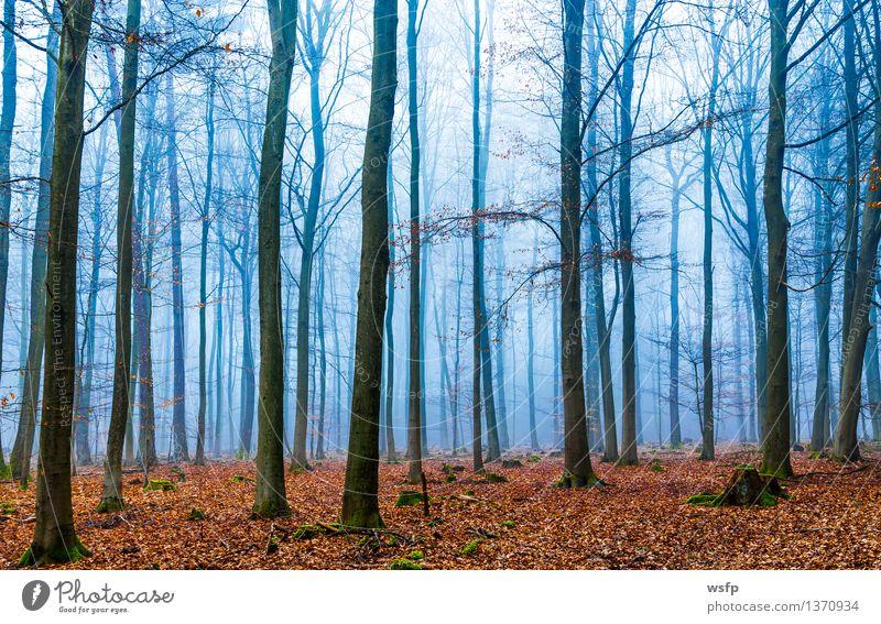 Blue Tree Leaf Forest Autumn Spring Dream Fog Surrealism Magic Enchanting Mystic Fantasy literature Enchanted forest Enchanted wood