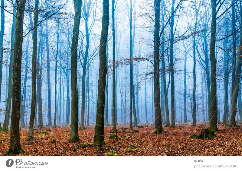 Magic forest in fog in blue and orange Spring Autumn Fog Tree Leaf Forest Dream Blue Surrealism Orange magic fantasy Enchanted forest Enchanted wood Mystic