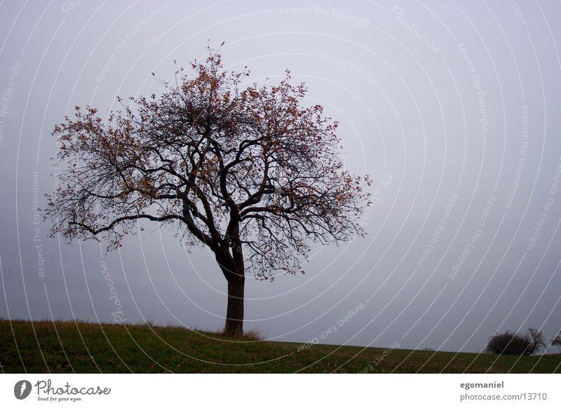 Tree (autumn version) Bad weather Autumn Dark Branch
