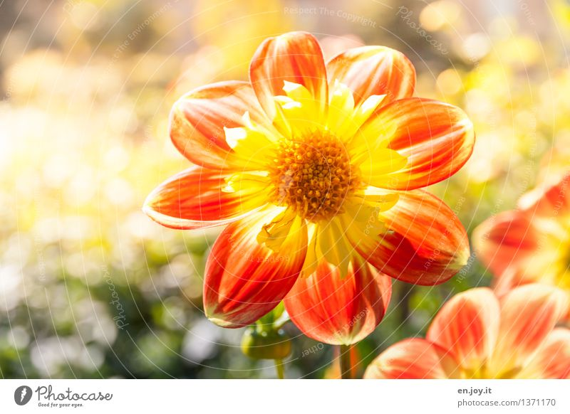 Nature Plant Beautiful Summer Flower Yellow Blossom Spring Happy Garden Bright Orange Growth Idyll Blossoming Joie de vivre (Vitality)