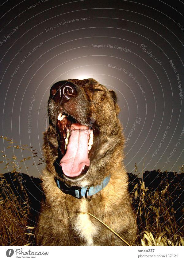 """im bored"" Nature Colour Summer Mammal dog sunny rhodes sleepy tired animals cat tongue"