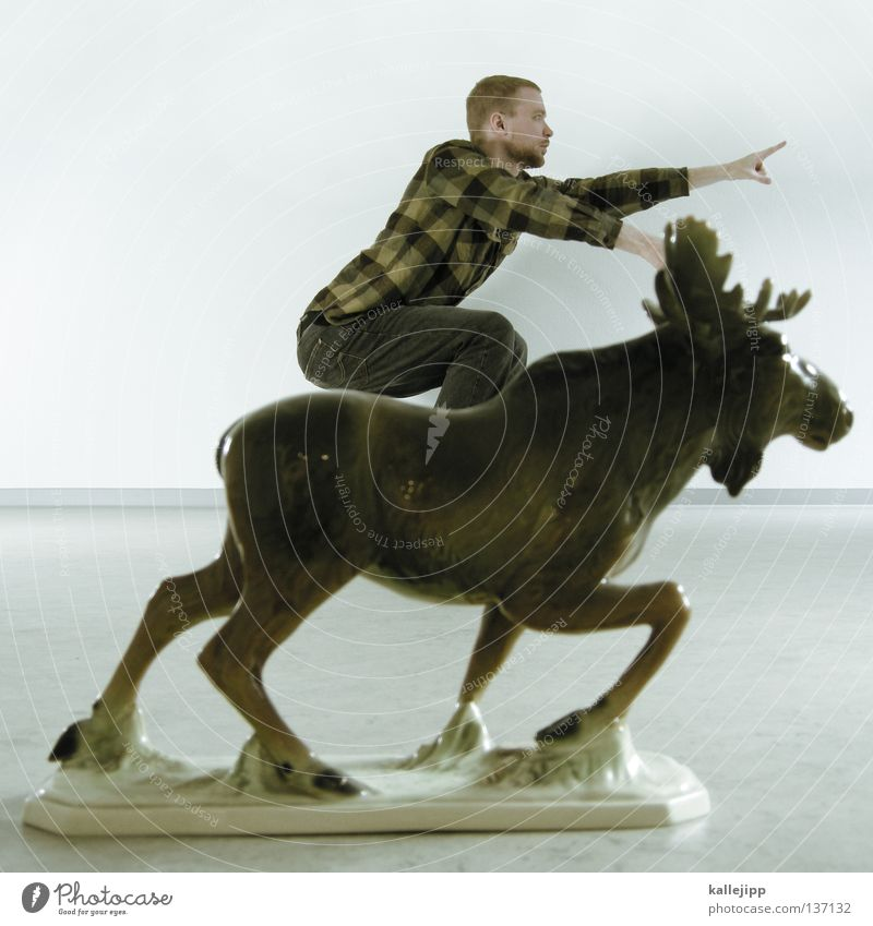 elk test Elk Equestrian sports Show jumping Gale Attack Direction Aim Single-minded Warrior Equestrian statue Animal Cute Trophy Success Antlers Canada Americas