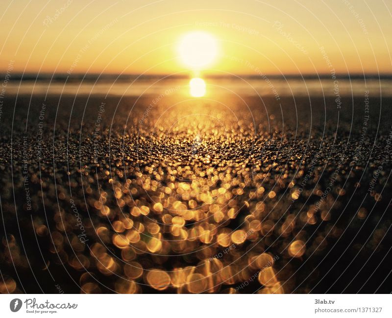 Sylt - not all that glitters is gold Elegant Happy Well-being Relaxation Nature Landscape Sand Horizon Sunrise Sunset Summer Weather Beautiful weather Beach