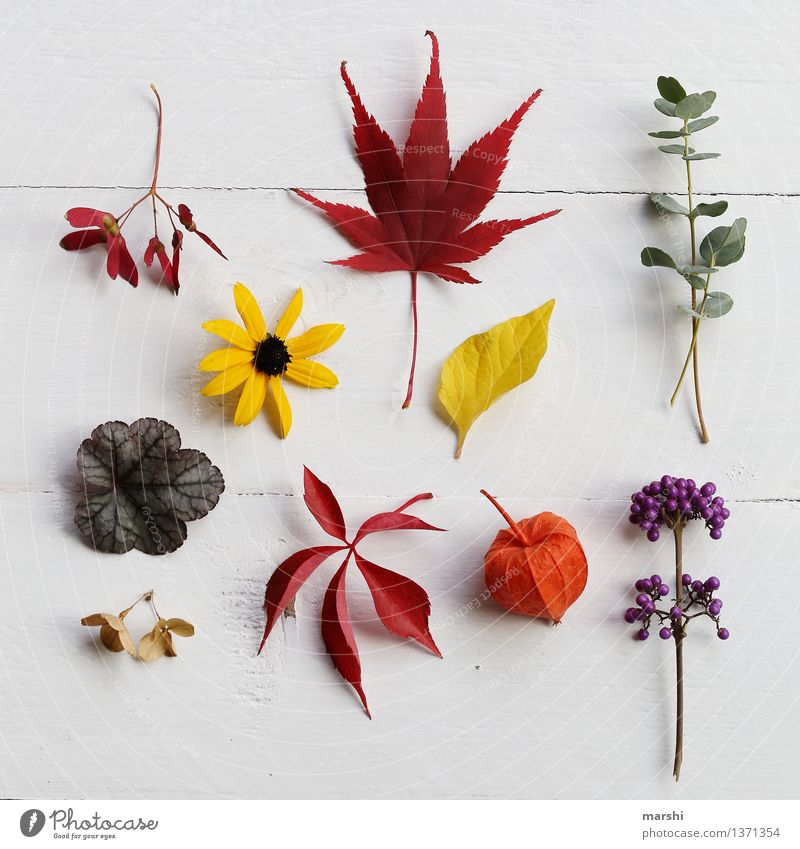 Autumn in the garden Nature Plant Flower Grass Bushes Leaf Blossom Foliage plant Agricultural crop Wild plant Multicoloured Yellow Green Violet Orange Red