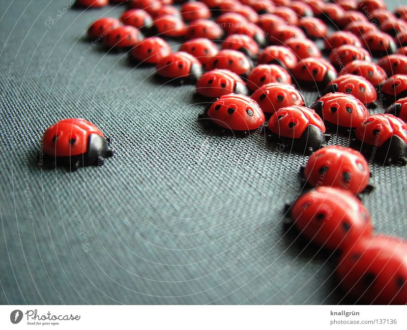 Red Black Animal Happy Gray Multiple Insect Point Symbols and metaphors Statue Obscure Plastic Ladybird Beetle Accumulation Placed