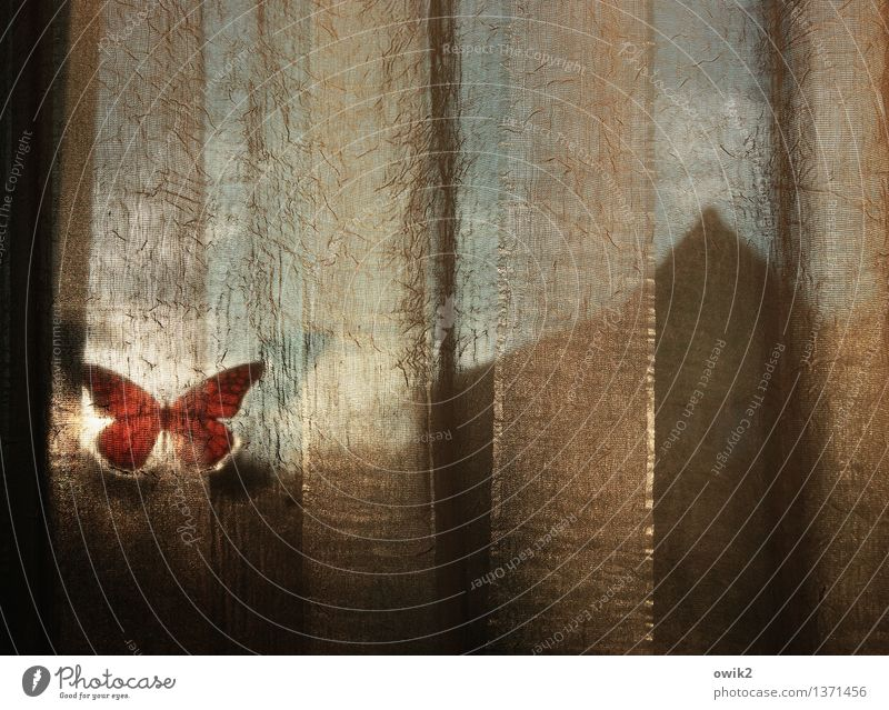 silent Window Gable Blur Hazy Label Butterfly Plastic Curtain Illuminate Moody Serene Calm Contentment Translucent Colour photo Interior shot Close-up Detail