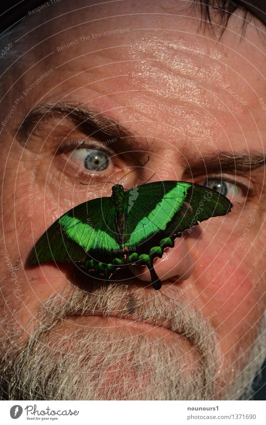 keep cool Human being Masculine Man Adults Skin Head Hair and hairstyles Face Eyes Nose Mouth Lips Facial hair 1 45 - 60 years Animal Wild animal Butterfly