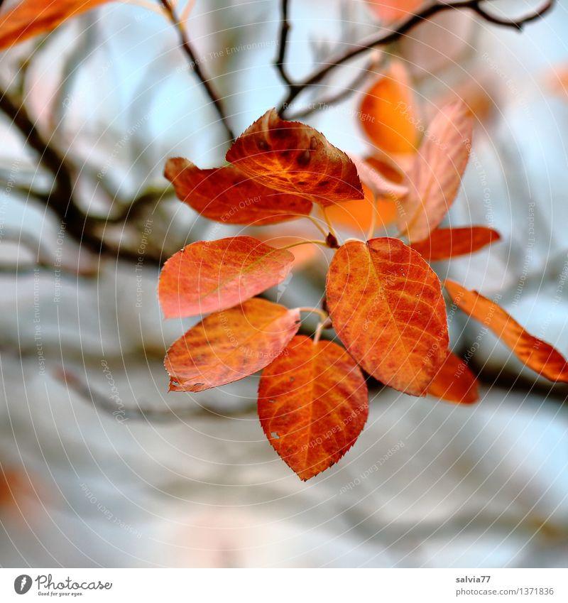 Last sheets Nature Plant Sky Autumn Bushes Leaf Rachis Autumnal Autumnal colours Park Illuminate Brown Yellow Red Moody Esthetic Senses Transience Change