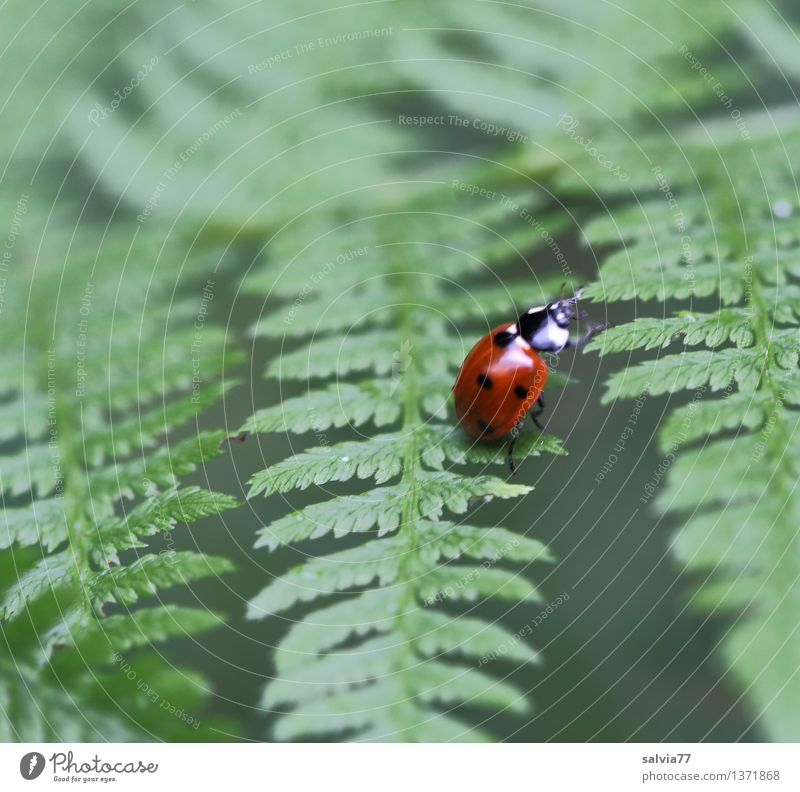 seven point Nature Plant Animal Summer Fern Leaf Foliage plant Beetle Seven-spot ladybird Ladybird 1 Crawl Exotic Natural Cute Green Red Happy