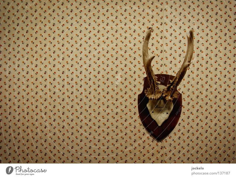 Hans Hunting Wallpaper Museum Flower Wild animal Old Brown Pride Feeble Innocent Deer Antlers Twenties The thirties Forties Hunter Trophy Old times Roe deer