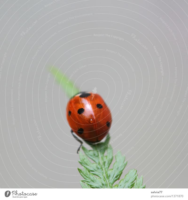 summiteers Nature Plant Animal Fern Leaf Beetle Ladybird Seven-spot ladybird Insect 1 Crawl Esthetic Exotic Above Positive Gray Green Red Happy Hope Belief