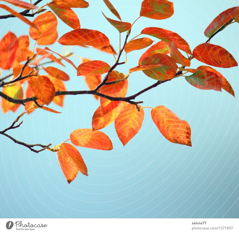 autumn colours Nature Plant Sky Autumn Beautiful weather Tree Bushes Leaf Twigs and branches Rachis Park Illuminate Esthetic Thin Small Dry Warmth Blue Brown