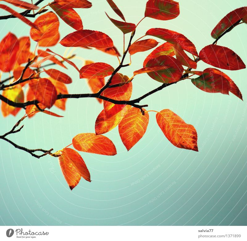 autumn colouring Nature Plant Sky Autumn Beautiful weather Tree Bushes Leaf Twig Rachis Park Forest Illuminate To dry up Bright Above Dry Warmth Brown