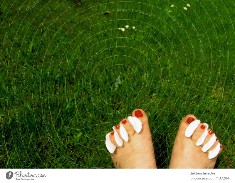 pretzels Nail Toes Nail polish Red Varnish Absorbent cotton Grass Meadow Green Summer Barefoot Beautiful Feet cotton pads Garden Pedicure Lawn Juttas snail