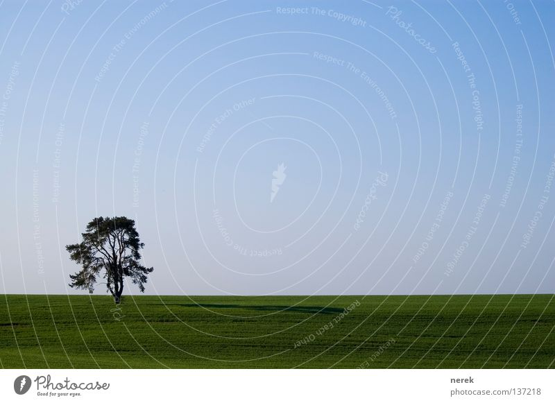 Nature Old Tree Green Blue Loneliness Far-off places Field Horizon Near Infinity Agriculture Americas Organic produce Steppe Interesting