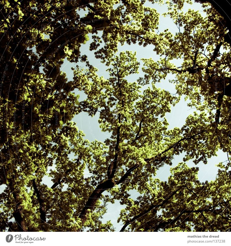 tree of life Tree Plant Green Forest Living thing Biology Organic Photosynthesis Park Treetop Leaf Leaf canopy Thin Back-light Sunbeam Radiation