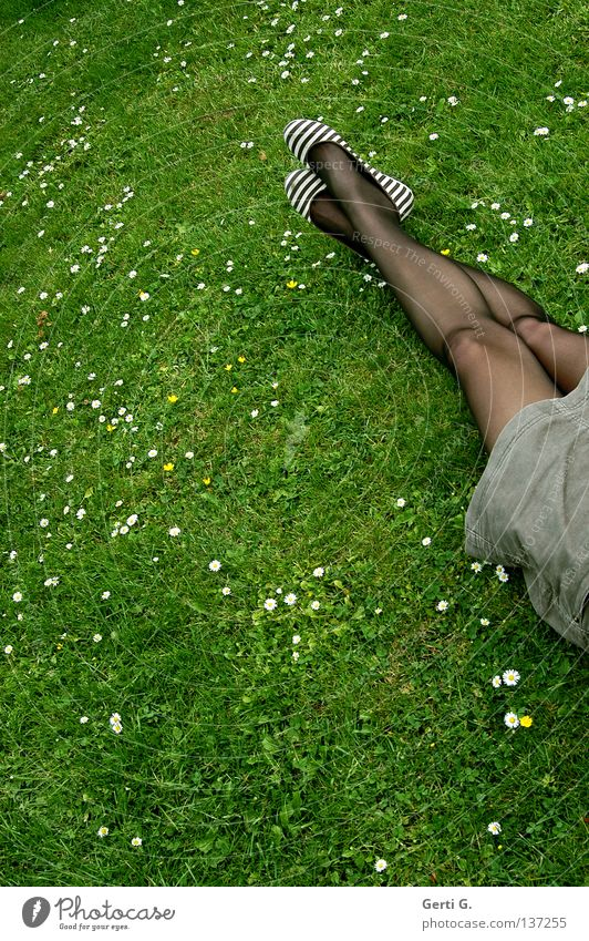 DanceLegs Grass Meadow Daisy Green White Park Relaxation Tights Stockings Black Transparent Great Striped Brown Calm Woman Material Short Goof off Thin Clothing