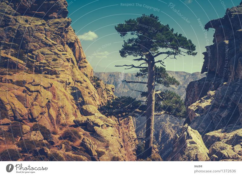 Nature Plant Summer Tree Landscape Loneliness Mountain Exceptional Rock Wild Growth Hiking Large Trip Individual Adventure