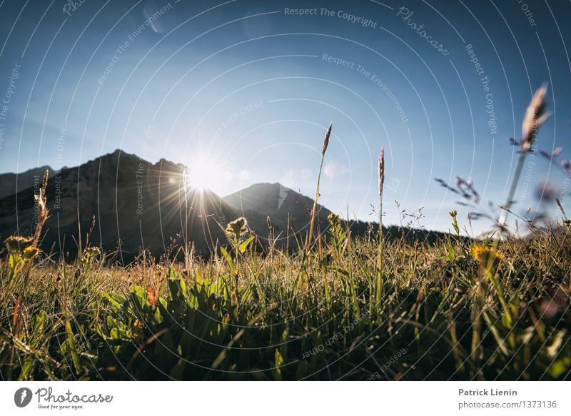 morning hour Vacation & Travel Environment Nature Landscape Elements Sky Sun Sunrise Sunset Summer Climate Climate change Weather Beautiful weather Plant Meadow