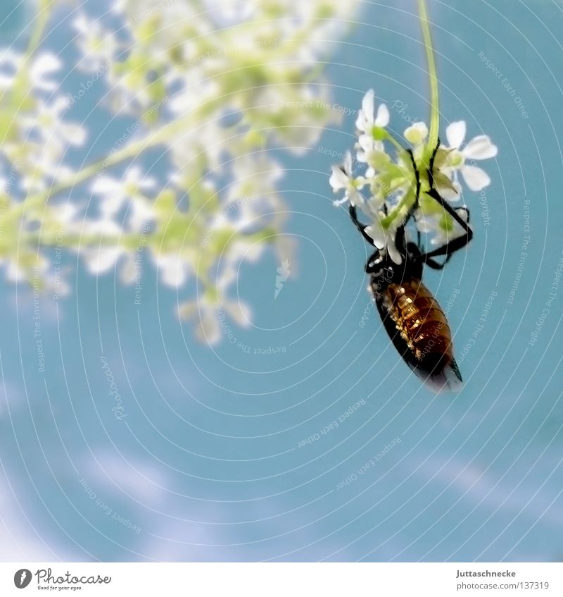 hang out Insect Flower To hold on Hang White Delicate Crawl Summer Field Small Dangle Bow Relaxation Go crazy Break Calm Pull-up Concentrate Beetle clasp Sky