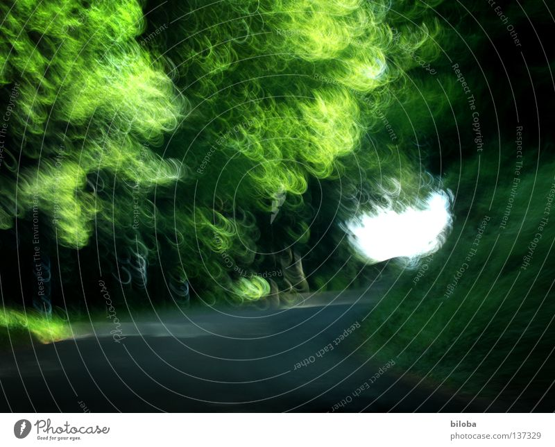 Nature Green Tree Plant Leaf Animal Forest Street Speed Driving Bright spot