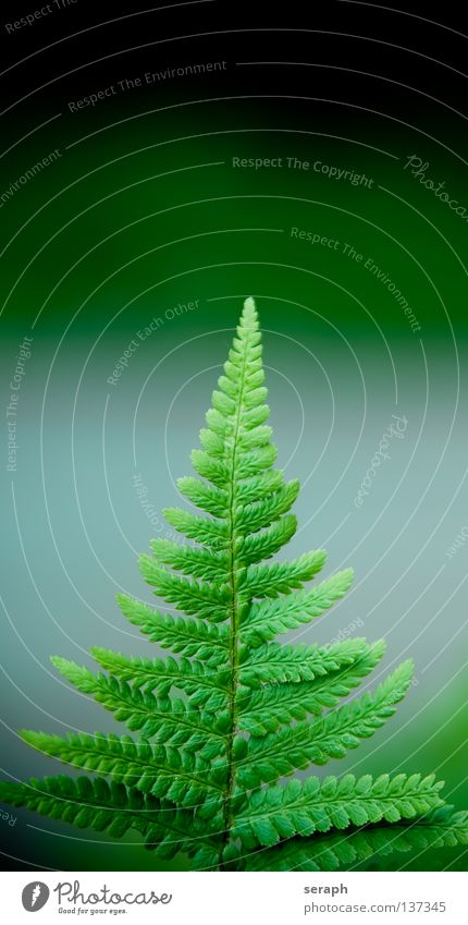 Fern Nature Green Plant Joy Colour Environment Dark Emotions Dream Background picture Closed Growth Fresh Fingers Circle Idyll