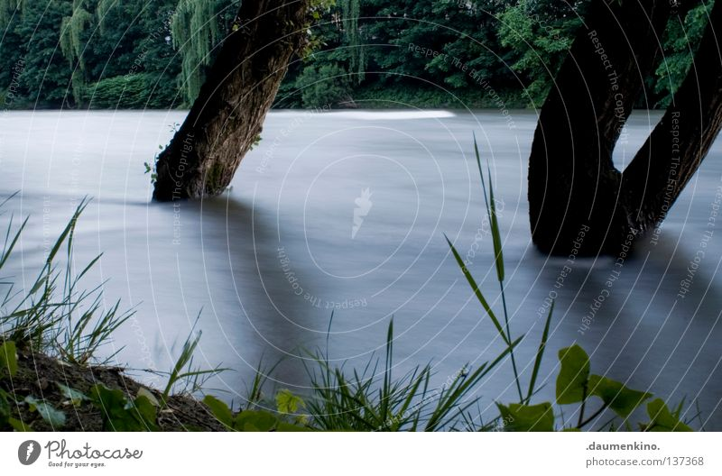Water Tree Plant Calm Leaf Meadow Grass Power Waves Fog Earth Force Speed River Bushes Exceptional