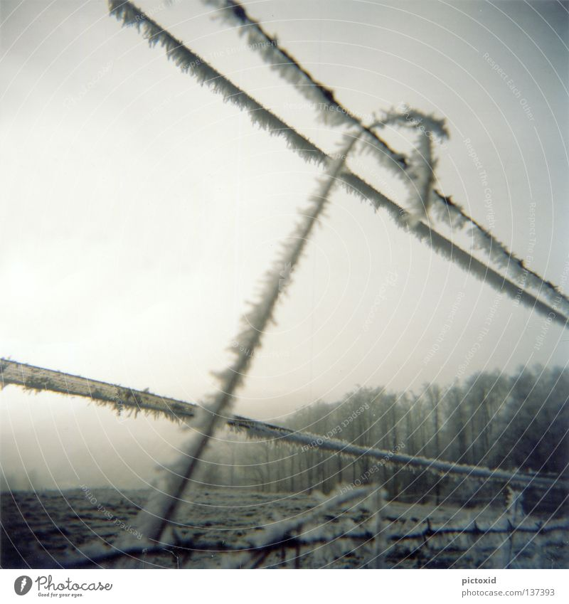 snow line Fence Forest Meadow Frozen Cold Ice Winter Snowscape Frostwork Gloomy Loneliness Twilight Holga Nature Crystal structure Lomography