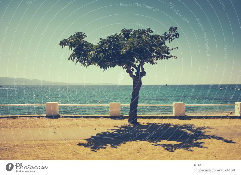 Nature Vacation & Travel Blue Summer Tree Ocean Relaxation Loneliness Far-off places Yellow Warmth Coast Small Sand Horizon Growth