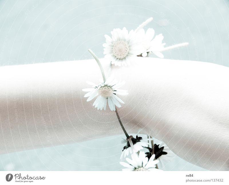 Woman Hand Beautiful Sun Flower Blossom Bright Arm Illuminate Sunflower Dazzle Luminosity