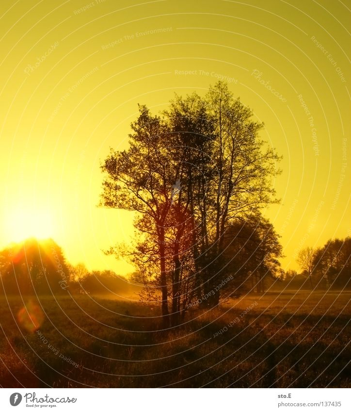Sky Nature Green Tree Sun Colour Leaf Clouds Calm Black Landscape Far-off places Yellow Meadow Graffiti Lanes & trails