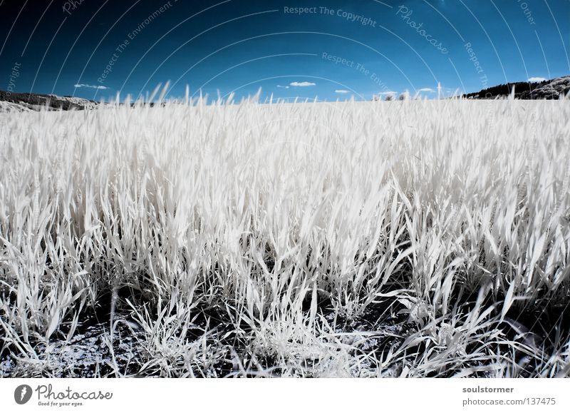 wide field in spring Infrared Meadow Passenger train Infrared color Foreign Grass Dandelion Back-light Reflection White Black Leaf Blade of grass Oxygen Survive