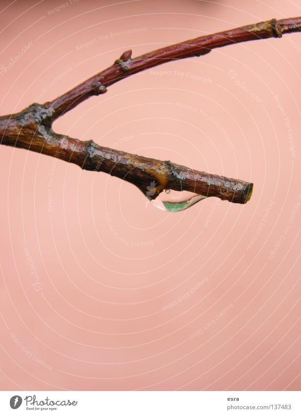 Nature Water Tree Life Rain Drops of water Branch