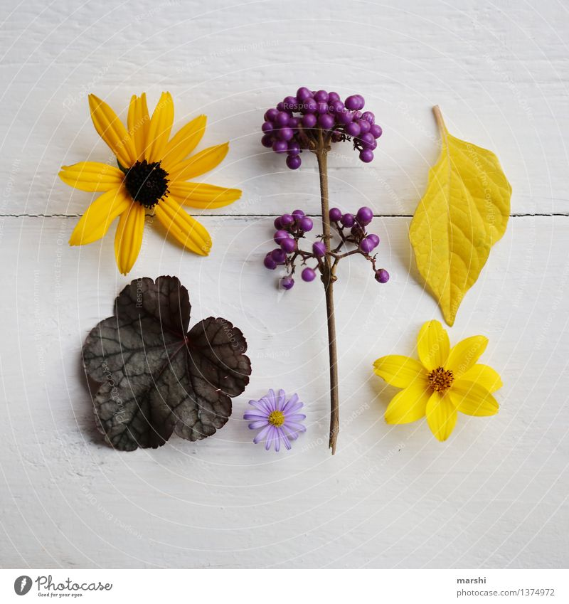Autumn in the garden II Nature Plant Summer Tree Flower Bushes Leaf Blossom Foliage plant Agricultural crop Moody Super Still Life Yellow Violet love pearl bush
