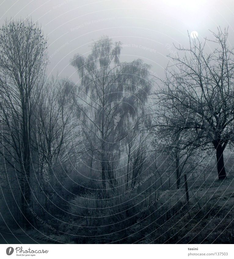 Nature Sky White Tree Winter Calm Cold Meadow Lanes & trails Ice Lighting Branch Frozen Seasons Moon Fence