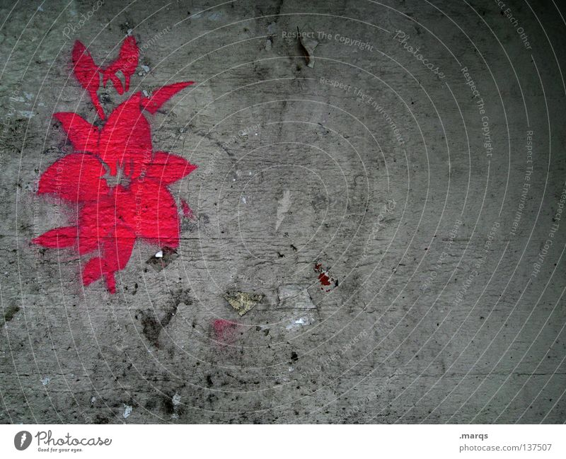 Lurid Flower Blossom Plant Growth Blossoming Pink Red Gray Wall (building) Dirty Street art Smeared Symbols and metaphors Stencil Silhouette Flashy Graffiti