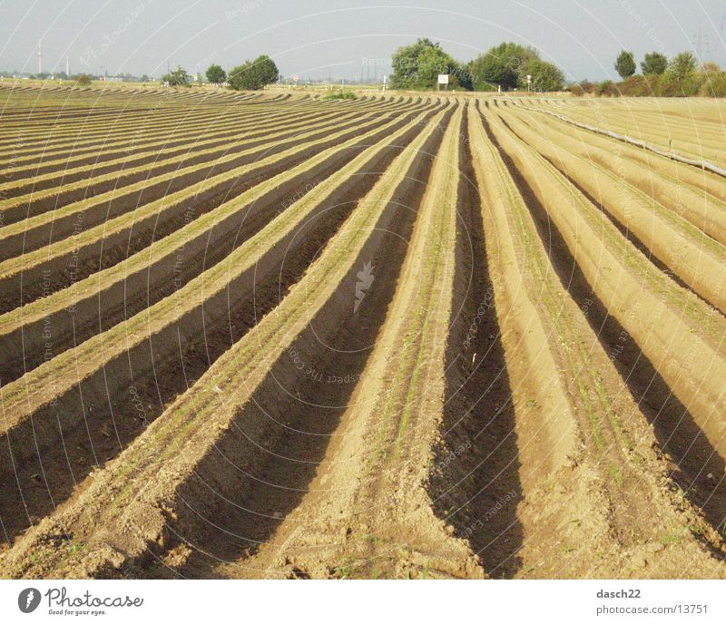 lines Field Plow Agriculture Furrow Americas Asparagus