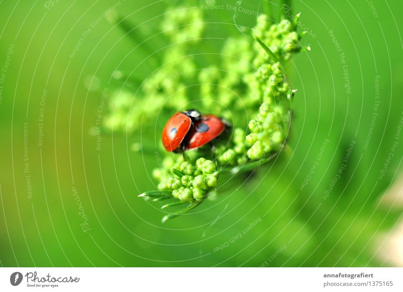 Nature Green Eroticism Red Leaf Animal Joy Love Spring Meadow Happy Garden Together Field Sex Romance