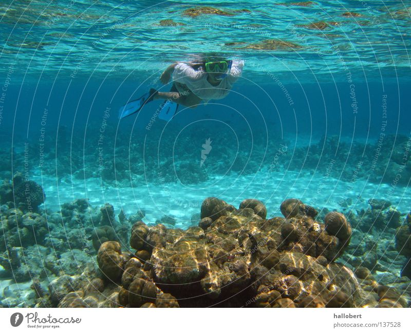 Maldives Water 17 Ocean Reef Dive Snorkeling Underwater photo dream vacation sea from below malidive