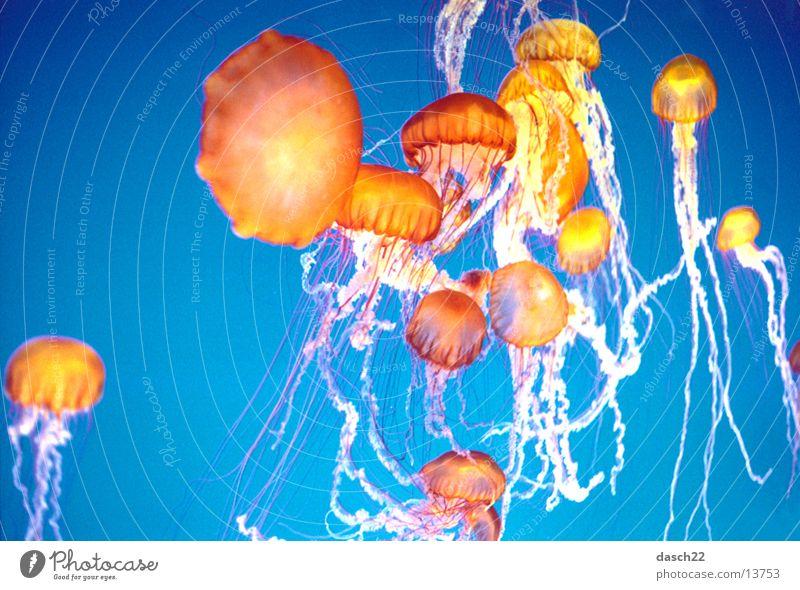 Super Jellyfish Ocean Deep sea Dive Orange Lamp Water