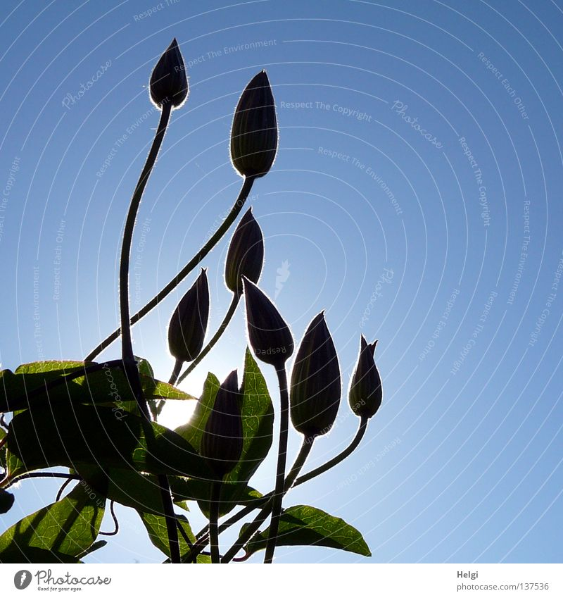 backlit Towering Wall (building) Growth Flourish Flower Blossom Stalk Long Thin Oval Plant Sun Lighting Sunbeam Spring Beautiful weather Tall Green Brown