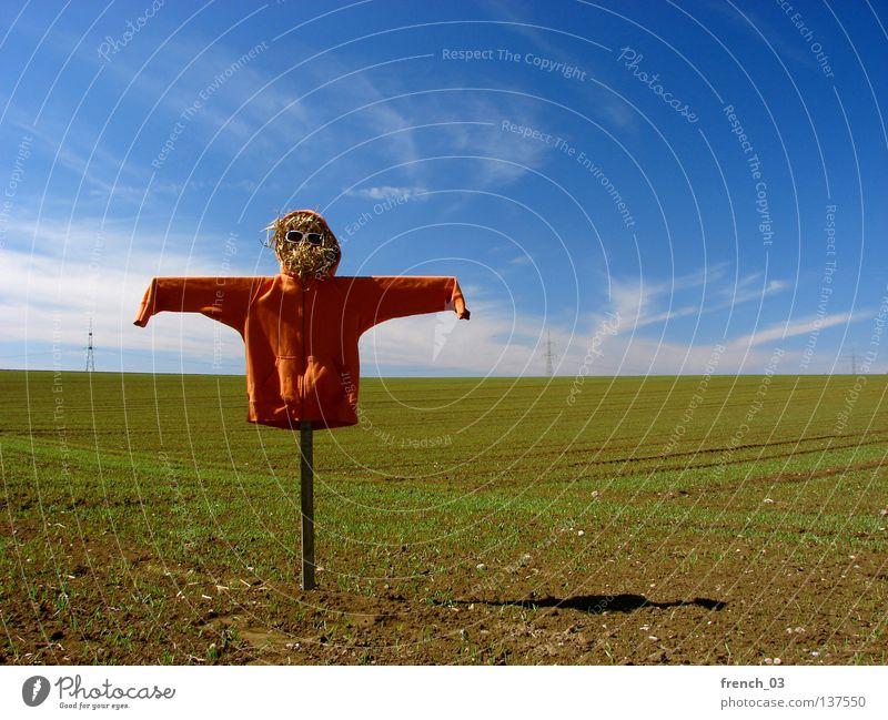Sky Nature Green Blue Clouds Loneliness Meadow Freedom Landscape Grass Wood Line Orange Bird Fear Field