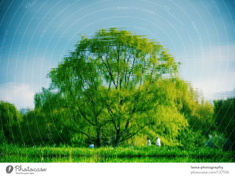 Sky Nature Water Blue Green Tree Summer Leaf Relaxation Meadow Landscape Garden Grass Spring Coast Lake