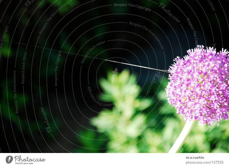 Nature Flower Summer Power Force Violet Stalk Silk Spectacle