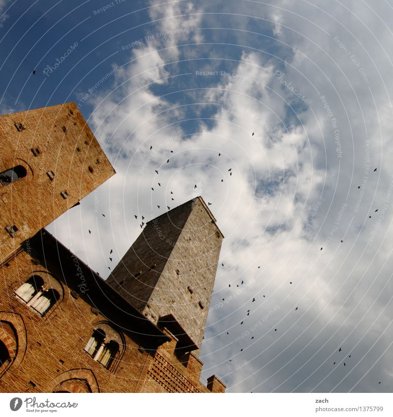 The Swarm San Gimignano Italy Tuscany Small Town Downtown Old town House (Residential Structure) High-rise Religion and faith Dome Palace Places Tower