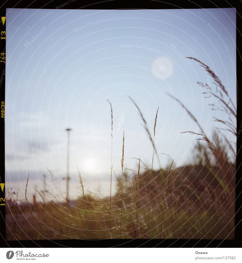 Sky Grass Lantern Blade of grass Depth of field Slide Ear of corn Medium format