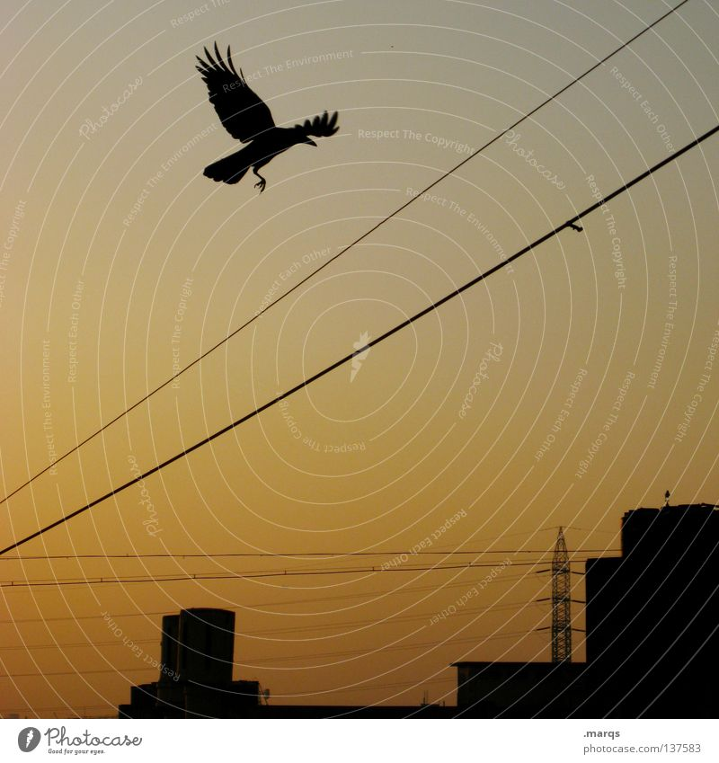 The Early Bird Twilight Morning Late Town Vanishing point Silhouette Electricity Summer Electricity pylon Departure Colouring Progress Wing Sunrise Sunset Black