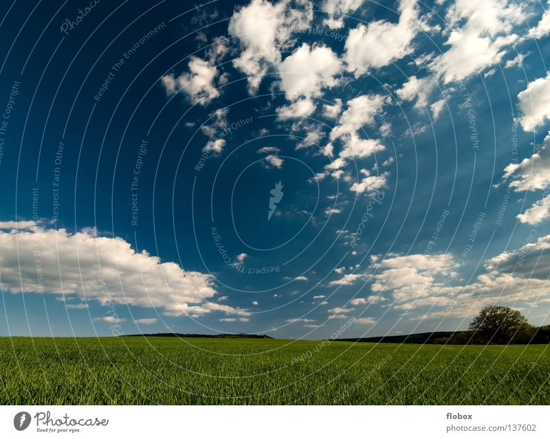 Nature Green Far-off places Landscape Field Agriculture Sky Picturesque Sky blue Clouds Clouds in the sky Cloud formation Cloud field Wisp of cloud