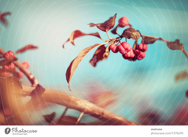 Sky Nature City Plant Blue Beautiful Relaxation Autumn Style Brown Moody Pink Dream Field Illuminate Elegant